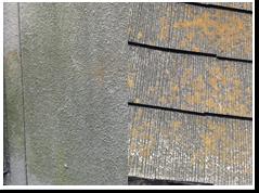 カビ・コケ・藻 塗膜表面のカビ、コケ、藻の発生は、塗料に含まれる薬効である防カビ、防藻剤の効力が無くなった塗膜の劣化により防水性が失われ表面に汚れが付着しやすくなります。 塗膜の防水性が無くなってくると雨水を吸収してコケが発生します。表面にカビ、コケ、藻等が発生します。