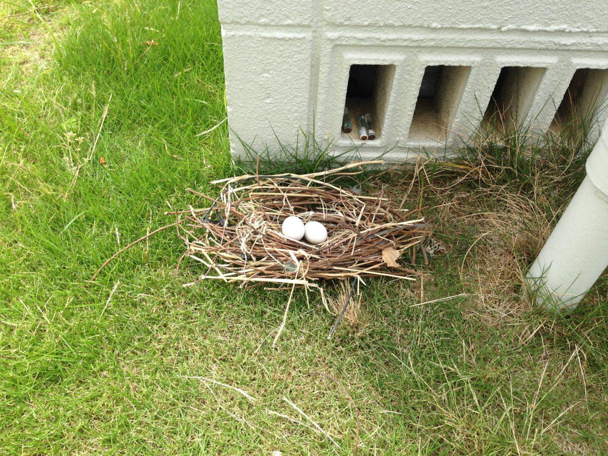 春日井市 H様邸完了‼とハトの巣