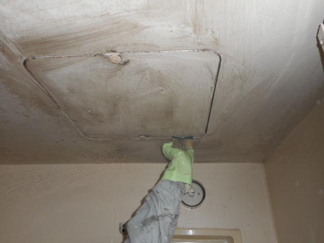 天井カビ除去